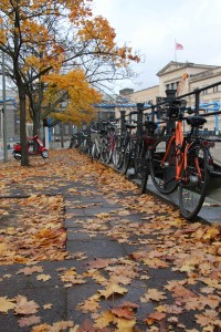 a row of bicycles sit amongst the leaves