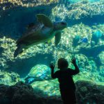 boy looking through the glass at a sea turtle